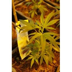 Miete Indoor Culture pro Pflanze